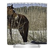 Among The Sea Oats Shower Curtain