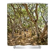 Among The Trees - The Mysterious Trees Of The Los Osos Oak Reserve Shower Curtain