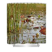 Among The Waterlillies 2 Shower Curtain