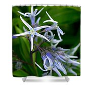 Amsonia Blue Stars Shower Curtain