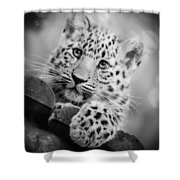 Amur Leopard Cub Portrait Shower Curtain