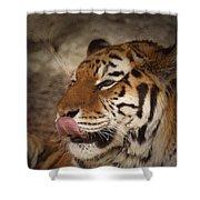 Amur Tiger 3 Shower Curtain by Ernie Echols