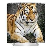 Amur Tiger Shower Curtain