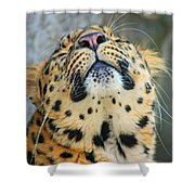 Amure Leopard Shower Curtain