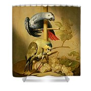 An African Grey And An Orange Winged Amazon Parrot On  A Perch With Grapes Shower Curtain