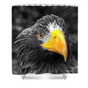 An American Eagle  Shower Curtain
