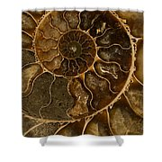 An Ancient Ammonite Pattern II Shower Curtain