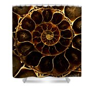 An Ancient Ammonite Pattern  Shower Curtain