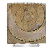 An Ancient Ammonite Pattern Vi Shower Curtain