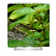 An Angry Anole Shower Curtain
