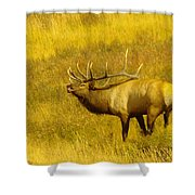 An Angry Snarl  Shower Curtain