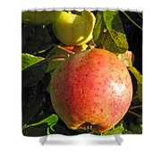 An Apple After Frost Shower Curtain