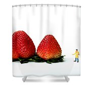 An Artist Drawing Strawberries Shower Curtain by Paul Ge