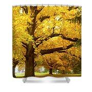 An Autumn Walk - 2 Shower Curtain