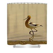 An Avocet Wading The Shore Shower Curtain