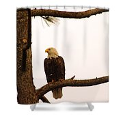 An Eagle Day Dreaming Shower Curtain