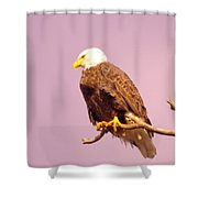 An Eagle Hanging Out Shower Curtain