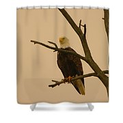 An Eagle In An Old Snag Shower Curtain