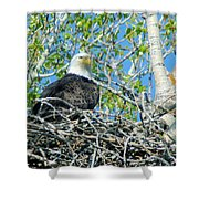 An Eagle In Its Nest  Shower Curtain