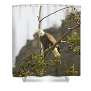 An Eagle In The Spring Shower Curtain