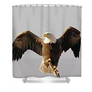 An Eagle Posing  Shower Curtain