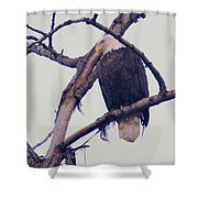 An Eagle Resting  Shower Curtain