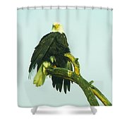 An Eagle Shaking It Off Shower Curtain
