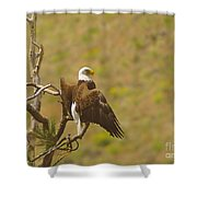 An Eagle Stretching Its Wings Shower Curtain