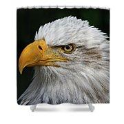 An Eagle's Portrait Shower Curtain