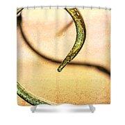 An Echoed Spiral Shower Curtain
