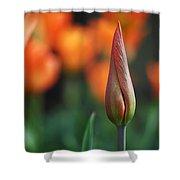 An Elegant Beginning Shower Curtain by Rona Black