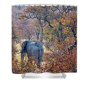 An Elephant Making Its Way Shower Curtain