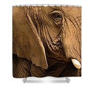 An Elephant's Eye Shower Curtain
