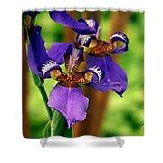 An Eyeful Iris Shower Curtain