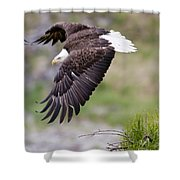 An Female Eagle Flys Protectively Over Shower Curtain