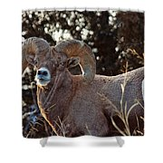 An Icy Stare Shower Curtain