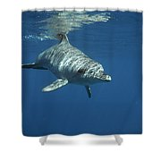 An Indo Pacific Bottlenose Dolphin Shower Curtain