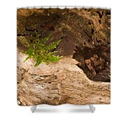An Isolated Moss Plant Shower Curtain