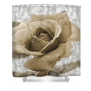An Old Fashion Rose Shower Curtain