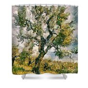 An Old Olive Grove Shower Curtain