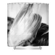 An Open Wing Shower Curtain