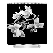 An Orchid  Shower Curtain by Tommytechno Sweden
