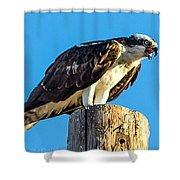 An Osprey Calling Shower Curtain