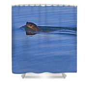 An Otter's Race Shower Curtain