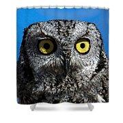 An Owl Shower Curtain