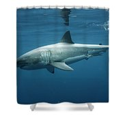 An Underwater Profile View Of A White Shower Curtain