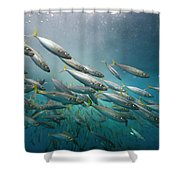 An Underwater View Of Schooling Fish Shower Curtain