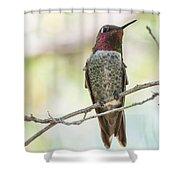 Ana Hummingbird Shower Curtain