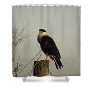 Anahuac Caracara Shower Curtain