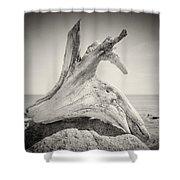Analog Photography - Driftwood Shower Curtain